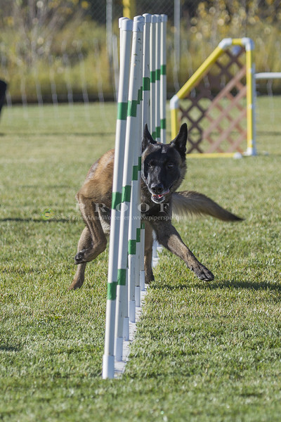 Grand Junction Agility  Oct_2014