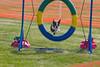 Purebred Boston Terrier