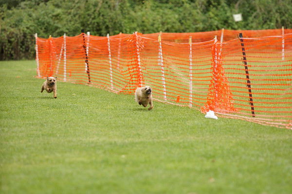 life with dogs lure coursing 2014