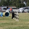 Mt Diablo DTC agility trial 2017