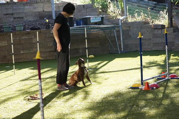 Zulu TLC puppy class 4/15