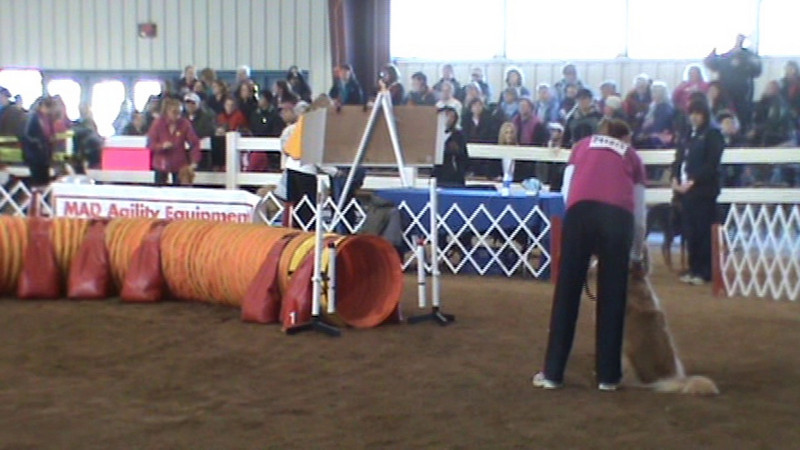 National Agility Championship Round 1 - JWW