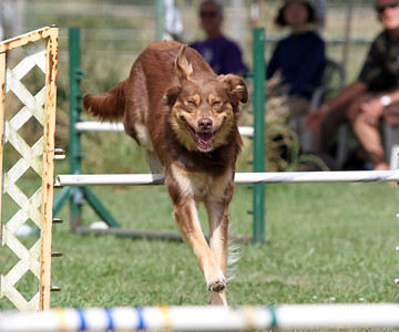 Advanced Agility Classes - 22 Aug 2012