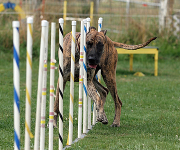 Agility at Fido's Farm