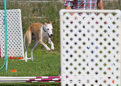 June 2013 Fun Match - Lg Dogs - Standard Course