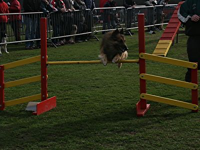 Agility Ter Dries 21/3/2004