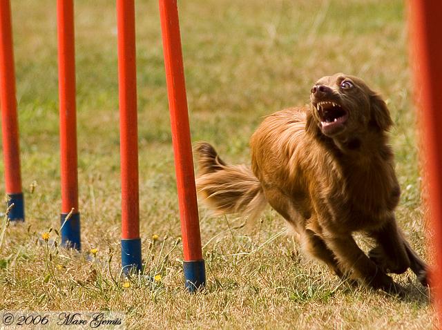 Pepita (Yannick - Onze Hondenschool Kapellen)