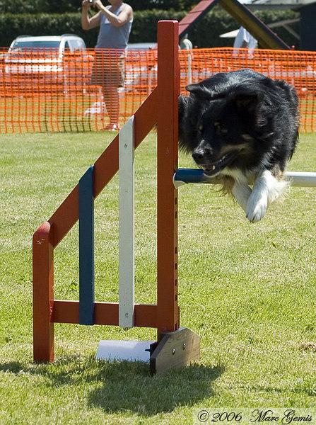 Cos van Alain Dunon voor de 2de keer over dezelfde sprong