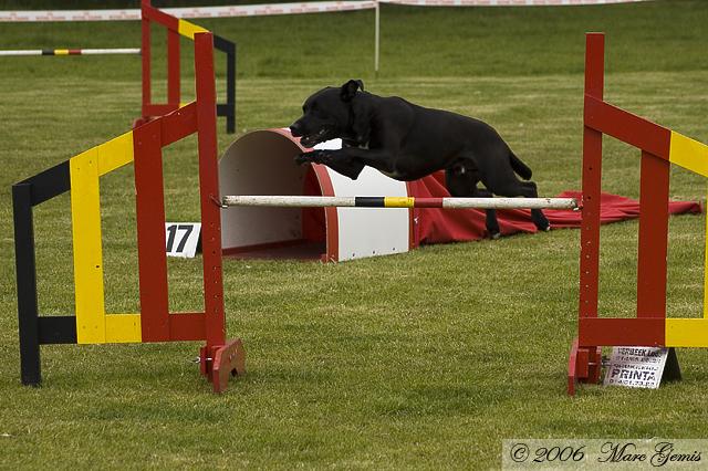 Max in de open jumping op weg naar een zevende plaats (heeft Anja mij toch wijsgemaakt)