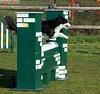 Anka van Eddy Daisomont - open jumping