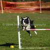 20130602dmkc-agility-00223
