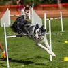 20130602dmkc-agility-00214