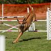 20130602dmkc-agility-00125