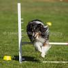 20130602dmkc-agility-00855