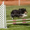 20130602dmkc-agility-00813