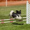 20130602dmkc-agility-00825