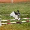 20130602dmkc-agility-00881