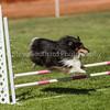 20130602dmkc-agility-00817
