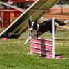 20130602dmkc-agility-02573
