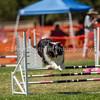20130602dmkc-agility-02624