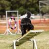 20130602dmkc-agility-02288