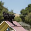 20130602dmkc-agility-02283