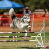 20130602dmkc-agility-02522