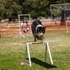 20130602dmkc-agility-02257