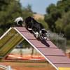 20130602dmkc-agility-02497