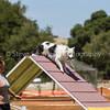 20130602dmkc-agility-02387
