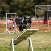 20130602dmkc-agility-02365