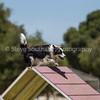 20130602dmkc-agility-02072