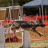 20130602dmkc-agility-02202