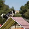 20130602dmkc-agility-02071