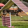 20130602dmkc-agility-02209