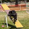 20130602dmkc-agility-02093