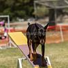 20130602dmkc-agility-02147
