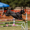 20130602dmkc-agility-02142