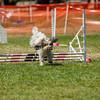 20130602dmkc-agility-02829