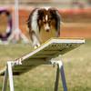 20130602dmkc-agility-02722