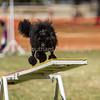 20130602dmkc-agility-02748
