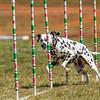 20130602dmkc-agility-01489