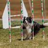 20130602dmkc-agility-01597