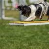 20130602dmkc-agility-01611