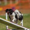 20130602dmkc-agility-01609