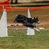 20130602dmkc-agility-01548