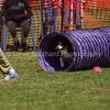 20130602dmkc-agility-01569