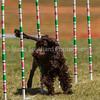 20130602dmkc-agility-01512