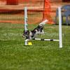 20130602dmkc-agility-02016