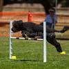 20130602dmkc-agility-01925